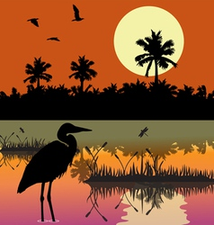 Everglades vector image