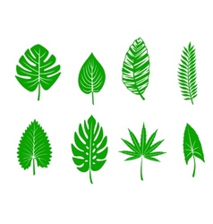 Green tropical leaves vector