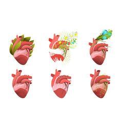 Heart human organ blooming and healthy clip art vector