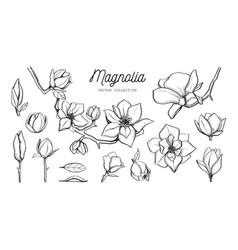 magnolia flower set hand drawn botanical vector image