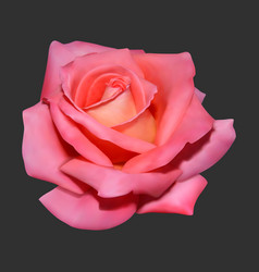 Realistic rose on dark background vector