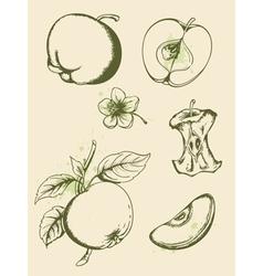 vintage ripe apples vector image vector image