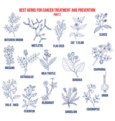 best herbs for cancer treatment and prevention vector image