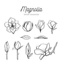 magnolia flower set hand drawn botanical 3 vector image