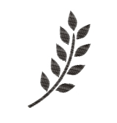 Monochrome striped branch olive with leaves vector