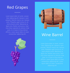 red grapes and wine barrel vector image