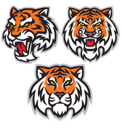 tiger head logo set template mascot design vector image