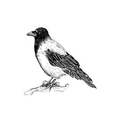 raven skech bird crows vector image vector image