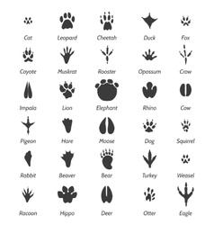 Animal tracks and bird footprints vector image