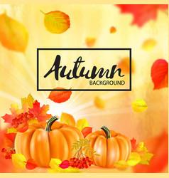 background orange autumn pumpkins vector image