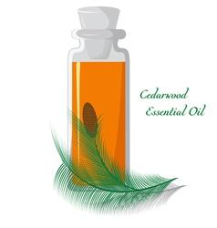 Cedarwood essential oil vector image