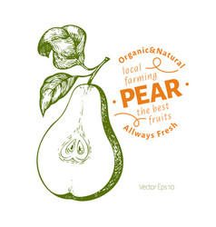 pear with leaves hand drawn garden fruit vector image