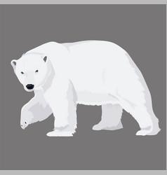 White bear vector
