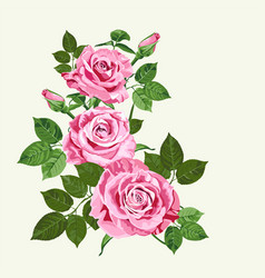 bright pink roses on pale green background vector image