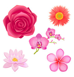Amazing pink flowers isolated set vector