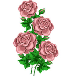 bouquet beige rose branch vector image