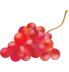 Grape fruit red color vector