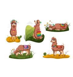 Llama peru alpaca animal cartoon set cute lama vector