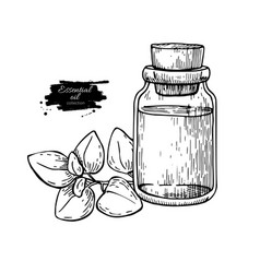 oregano essential oil bottle and oregano leaves vector image
