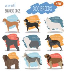 Shepherd dog breeds sheepdogs set icon isolated vector