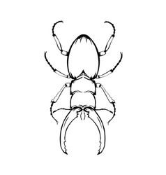 sketch beetle vector image