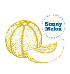 whole melon and a piece melon hand drawn vector image