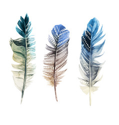 hand drawn watercolor feathers with ornaments vector image vector image