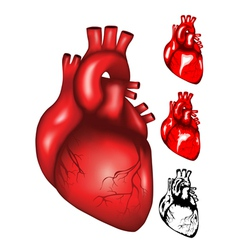 heart2 vector image