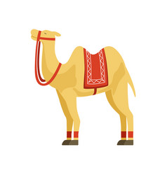Camel whit saddle and cover on the back desert vector