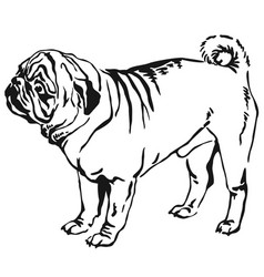 Decorative standing portrait of dog pug vector