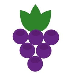 Delicious fruit grapes isolated icon design vector