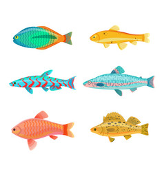 Jewel cichlid dempsey fish vector