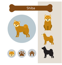 Shiba dog breed infographic vector