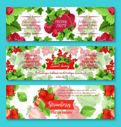 banners for fresh berries and fruits vector image