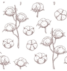 Cotton flowers seamless pattern vector