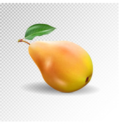 Pear realistic 10eps pear punching bag vector