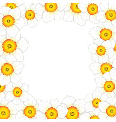 White daffodil - narcissus flower border vector