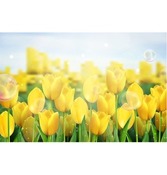 Yellow tulips flowers in the garden vector image