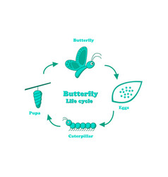 butterfly life cycle in monochrome style vector image vector image