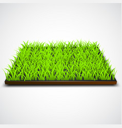 square of green grass field vector image