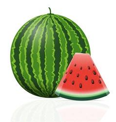 watermelon 05 vector image vector image