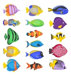 Exotic Fish Set vector image vector image