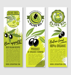 banners of olives and italian olive oil vector image vector image