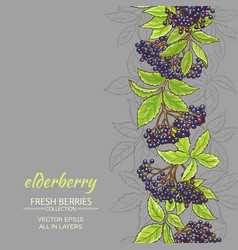 elderberry background vector image