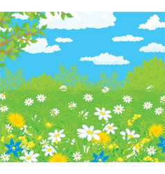 Field with flowers vector image