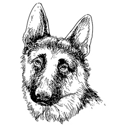 German Shepherd 01 vector
