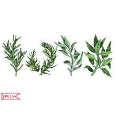 hand drawn colorful with herbs vector image