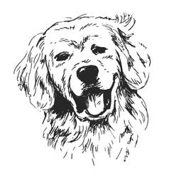 hand sketch dogs head vector image