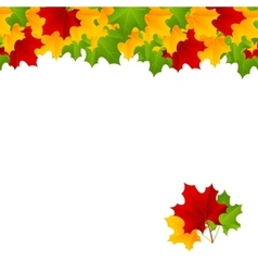 maple template vector image