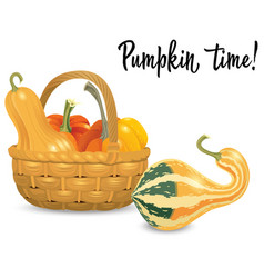 Wicker basket full pumpkins isolated on white vector